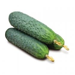 Seminte de porumb KWS 2376 - Agrobro ro