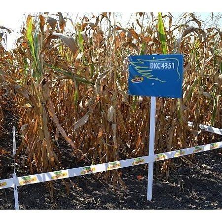 Seminte de porumb Dekalb DKC FAO